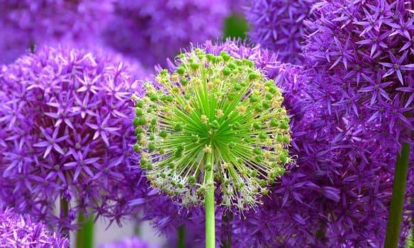 flower-139356_960_720