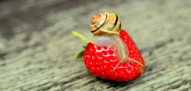 strawberry-799597_960_720